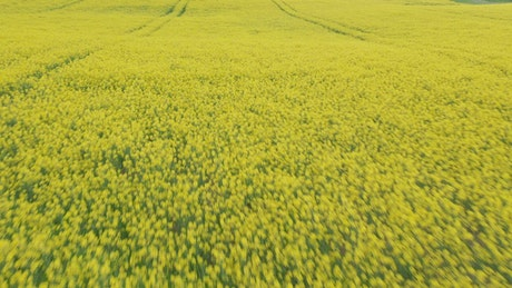 Drone flying over fresh crops