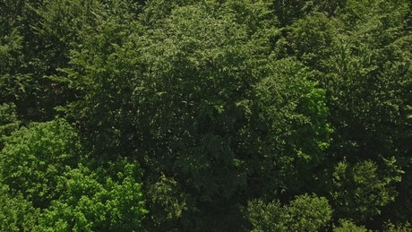 Drone flying over the tops of trees
