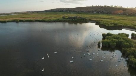 Drone shot of lake wildlife