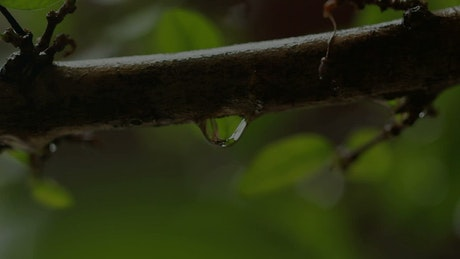 Drops of rain in a garden