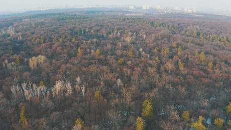 Dry forest, aerial view