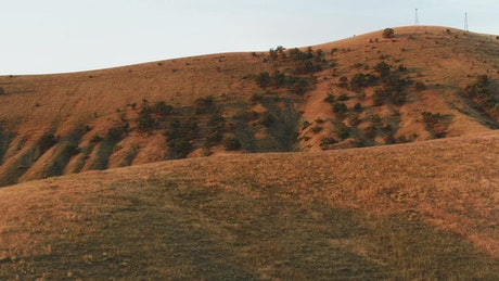 Dry hills and trees