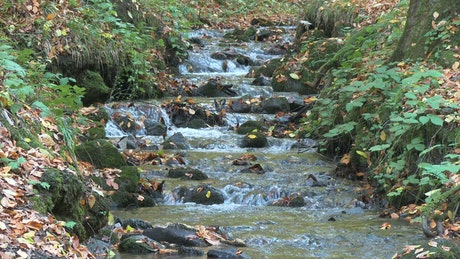 Dry leaves fall into the stream in autumn forest