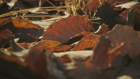 Dry leaves from autumn on the ground