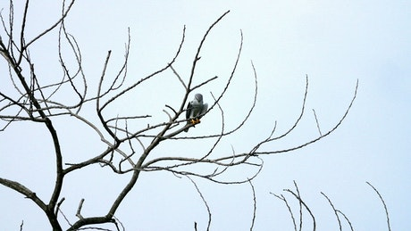 Eagle resting on a branch
