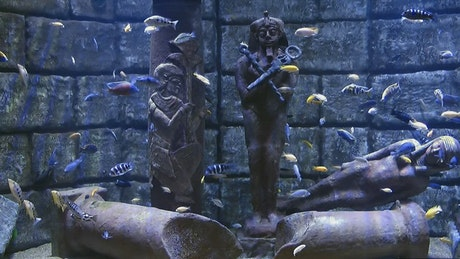 Egyptian statues underwater surrounded by fish