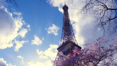 Eiffel tower and Sakura tree