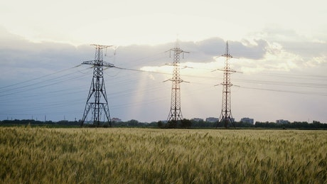 Electric towers in a wheat field