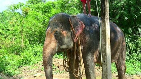 Elephan taking a bath