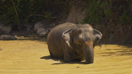 Elephant cooling off in a lake