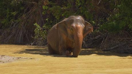 Elephants walking inside a river