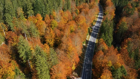 Empty road between an autumn forest