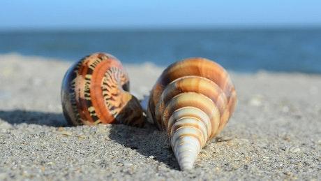 Empty shells on the beach