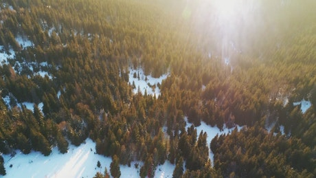 Evening light covering a winter forest