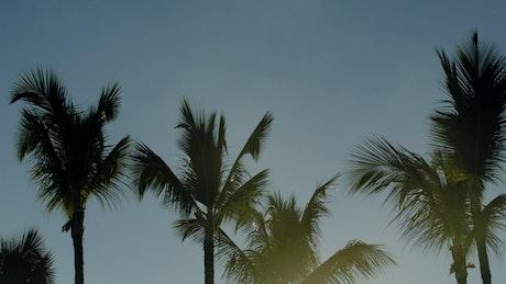 Evening sun shining through trees