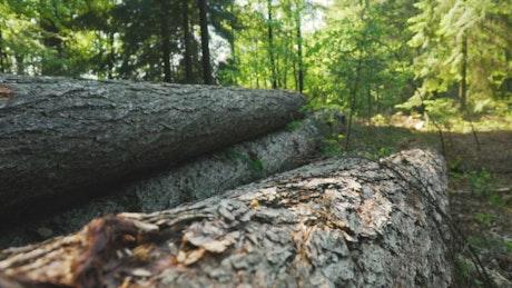 Fallen logs in a forest
