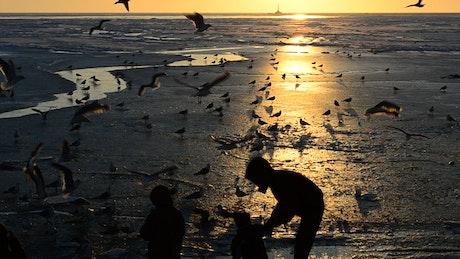 Family feeding birds at sunset