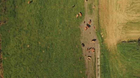 Farm animals in the sun
