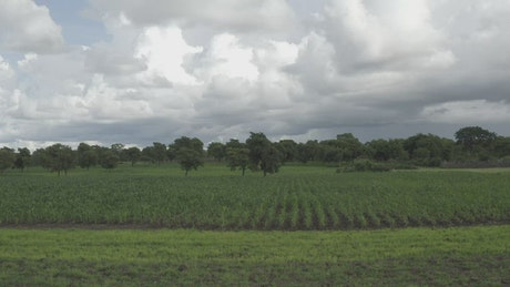 Farm in Africa with crops