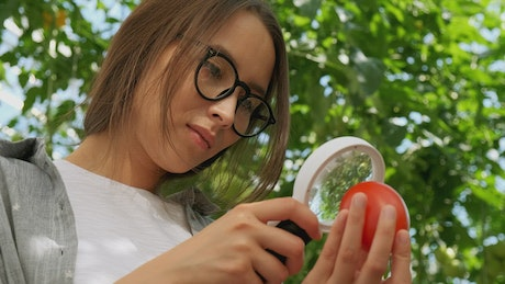 Farmer checking a tomato with a magnifying glass