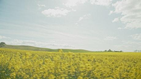Farmers field in the summer