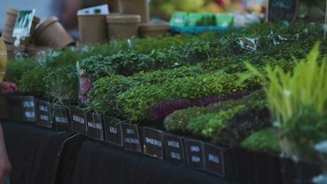 Farmer's market display of fresh herbs