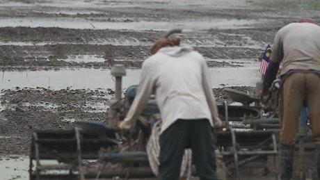 Farmers ploughing a field