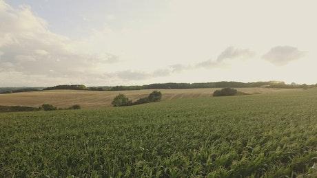 Farmland during the summer months