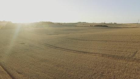Farmland ready for harvesting