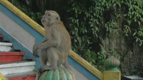 Feeding a Monkey in Malaysia