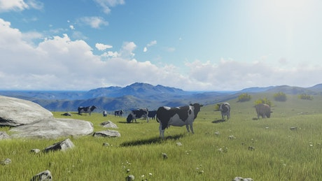 Feeding cows on a sunny meadow in 3D