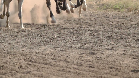 Feet of horses running on a dirt road
