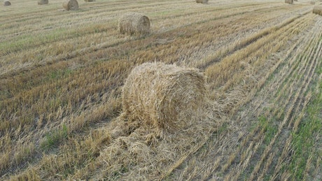 Field with grass rolls