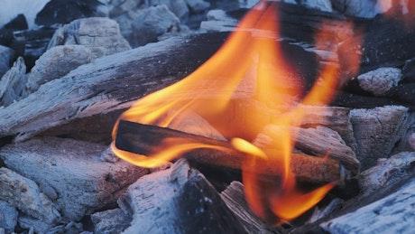 Fire burns a piece of wood