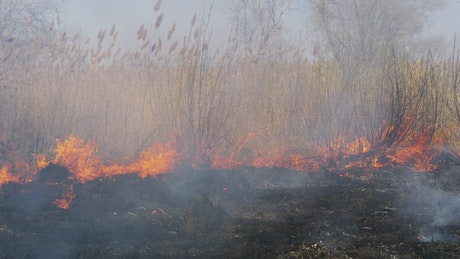 Fire consuming dry grass in the forest