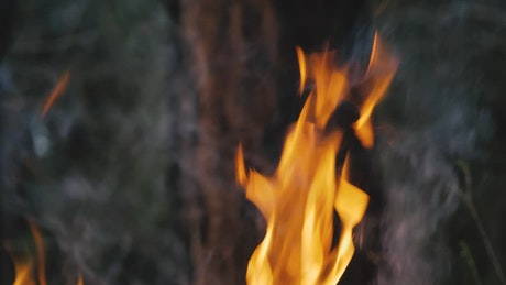 Fire in front of tree trunk