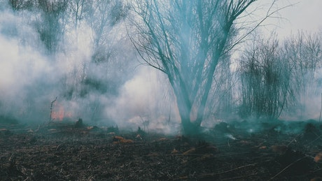 Fire in the woods with a lot of smoke