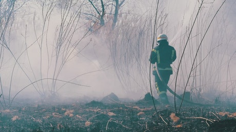 Firefighters extinguishing a fire in the forest