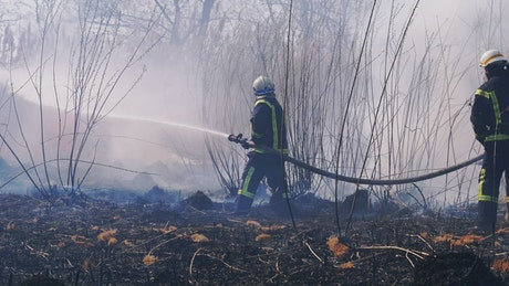 Firefighters throwing water in the woods