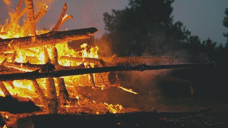 Firewood burning in a forest, close up