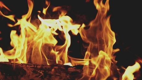 Firewood burning on black background