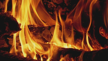 Firewood burning with large flames