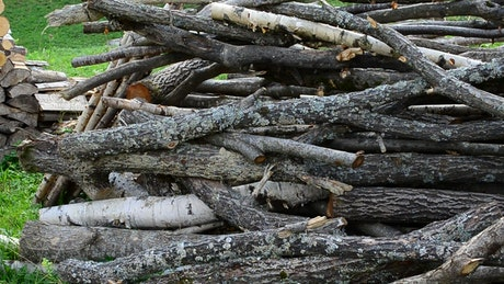 Firewood stacked in a field