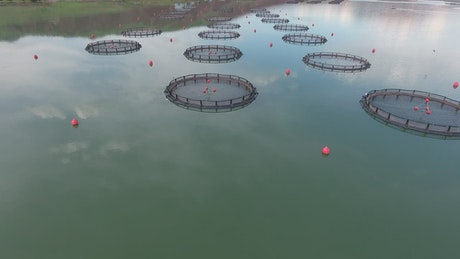Fish farm in the lake