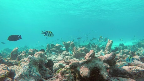 Fish swimming on a reef, underwater shot