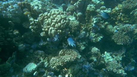 Fish swimming over a reef