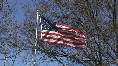 Flag between trees