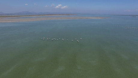Flamingos flying above the water