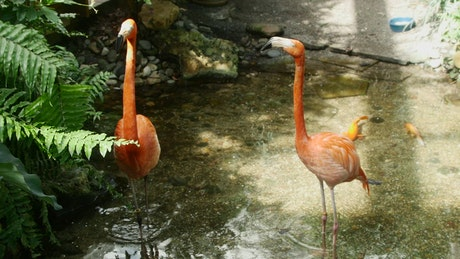 Flamingos in a lake in the jungle