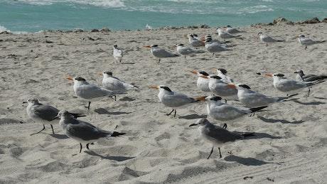 Flock of birds standing on the beach